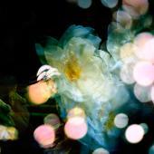 Petites Natures 03