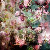Pink Storm 01